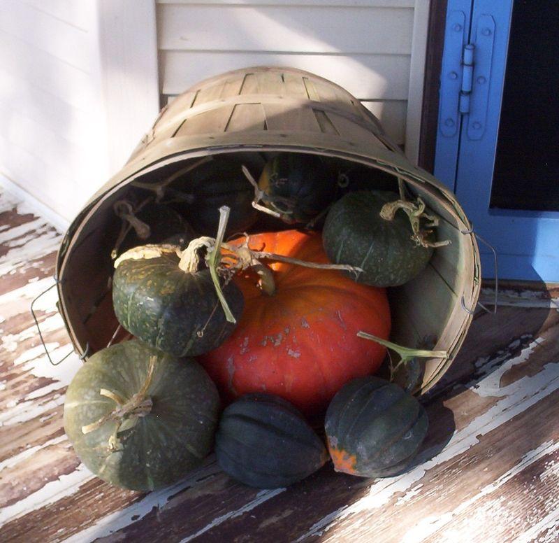 Bushel basket of squash