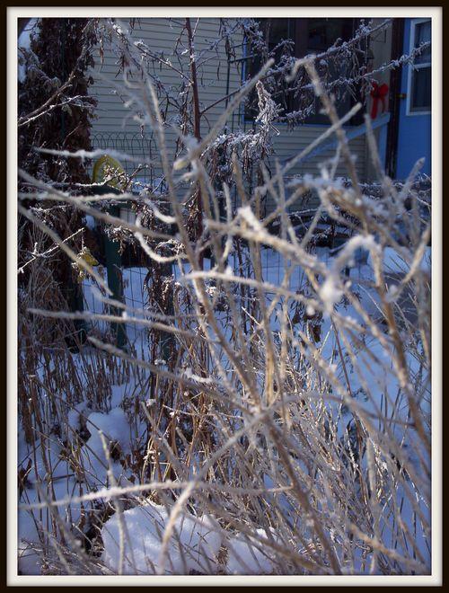 Frosty plants