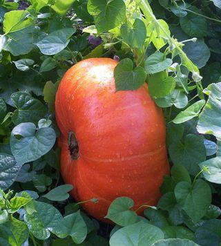 Stormwashed pumpkin cropped