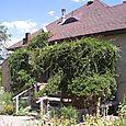 Vine-covered Back Porch