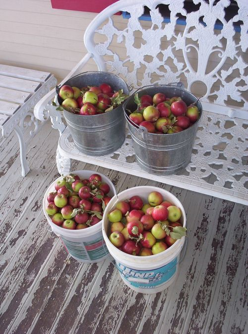 Apple harvest on front porch 2