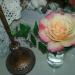 Bi-colored, scented rose.