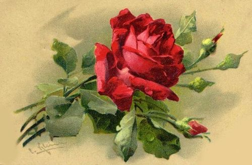 Vintage rose (640x418)