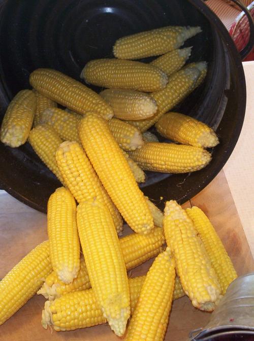 Corn cob abundance (2)