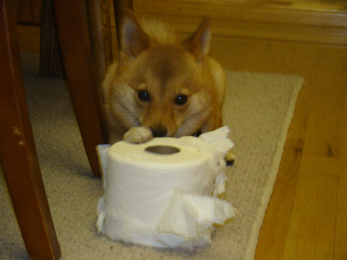 Toilet paper dog