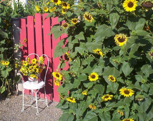 Cheerful Sunflowers