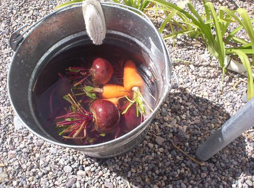 Just washed beets and carrots