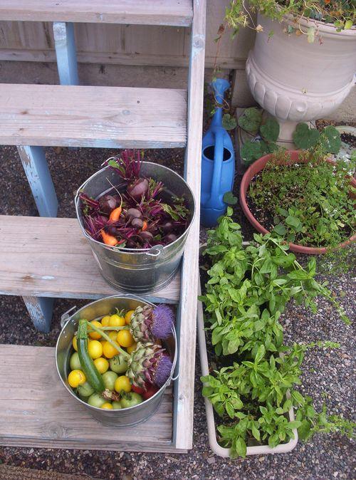 Garden Bounty on the Side Yard steps