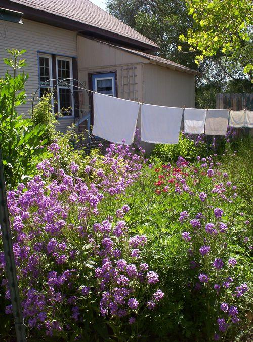 Kitchen Garden Clothesline