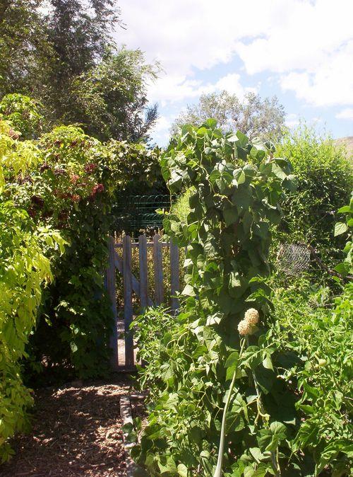 West end of the Kitchen Garden
